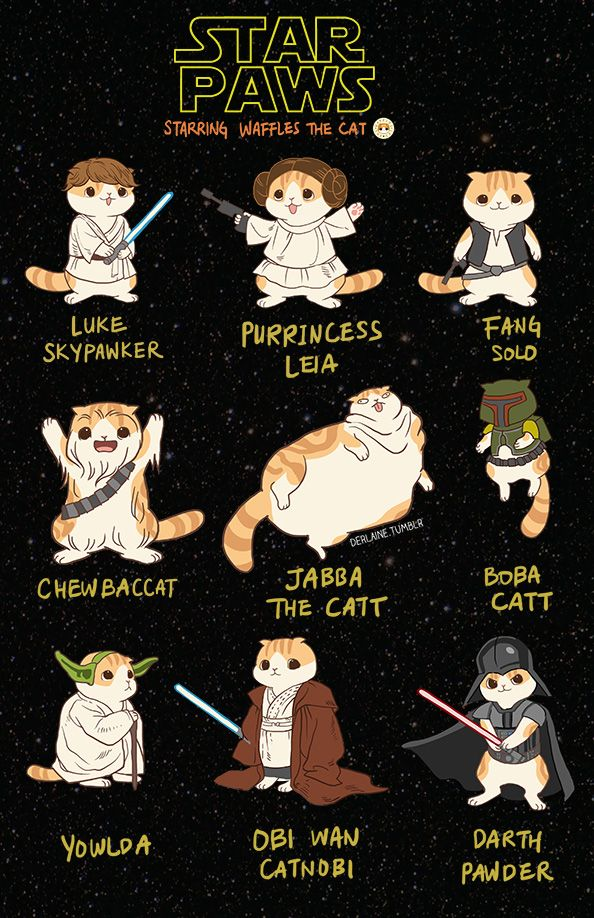 Leia Meow 2014
