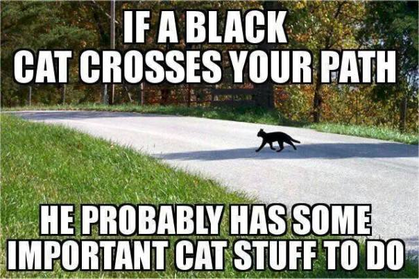 Black cat on the go