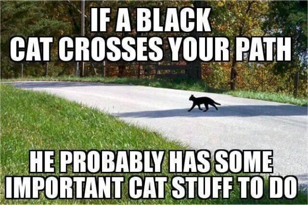 Black cat on the go