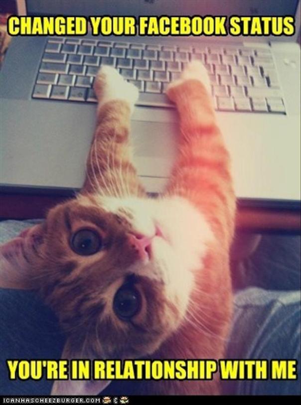 3-funny-kitty.jpg