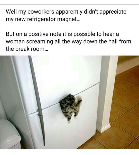 Furry fridge friend