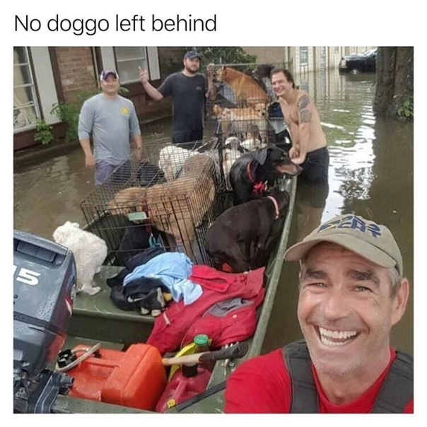 No doggo left behind
