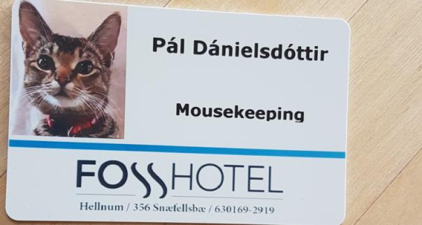 Knock, knock, knock… Mousekeeping!