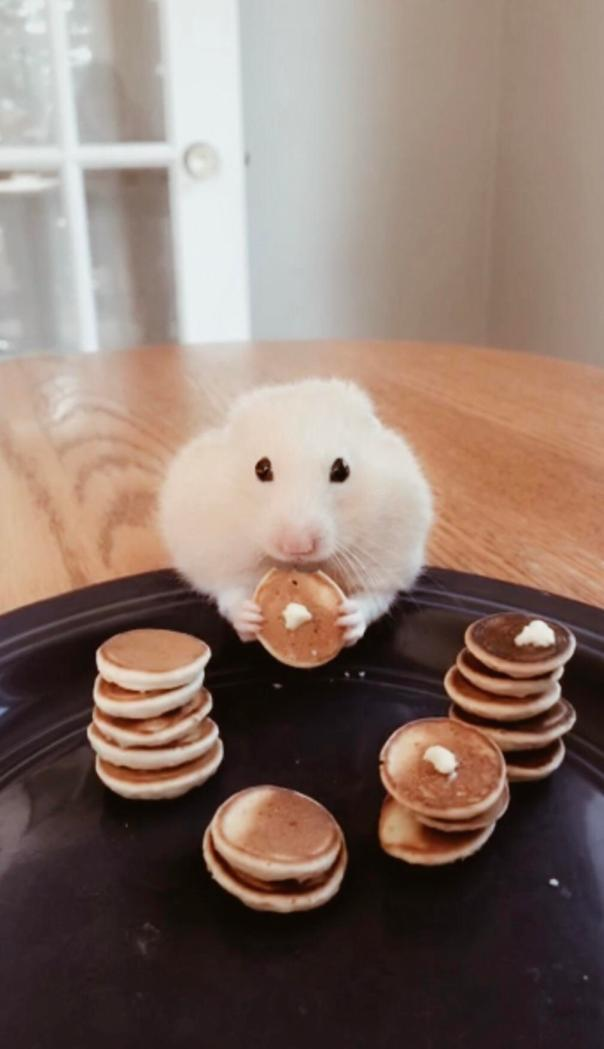 Pancakes for his hamster cheek pouches