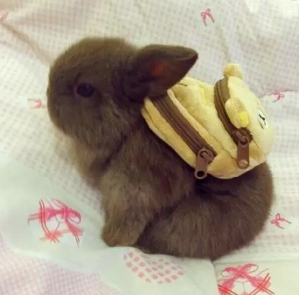 Bunny ready to get back to school